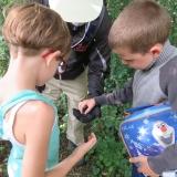 Checking out a cicada