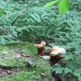 Colourful Fungus