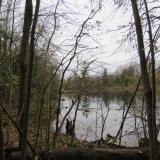 Lots of wetland scenery