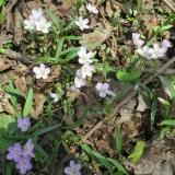 04 Spring flower