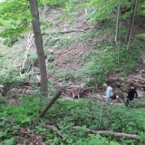 Down, down into the ravine - lots of fallen trees and branches.