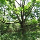 Interesting Tree formation