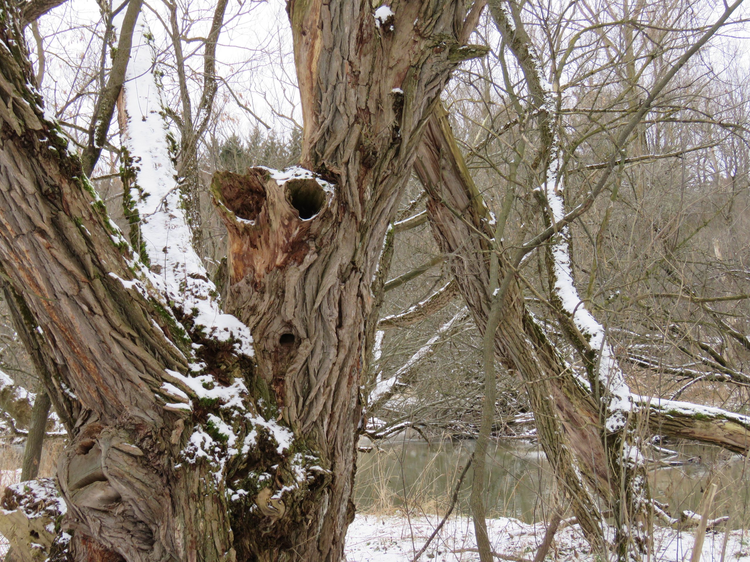 Faces hiding in the woods