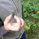 Braveheart got to hold the cicada.