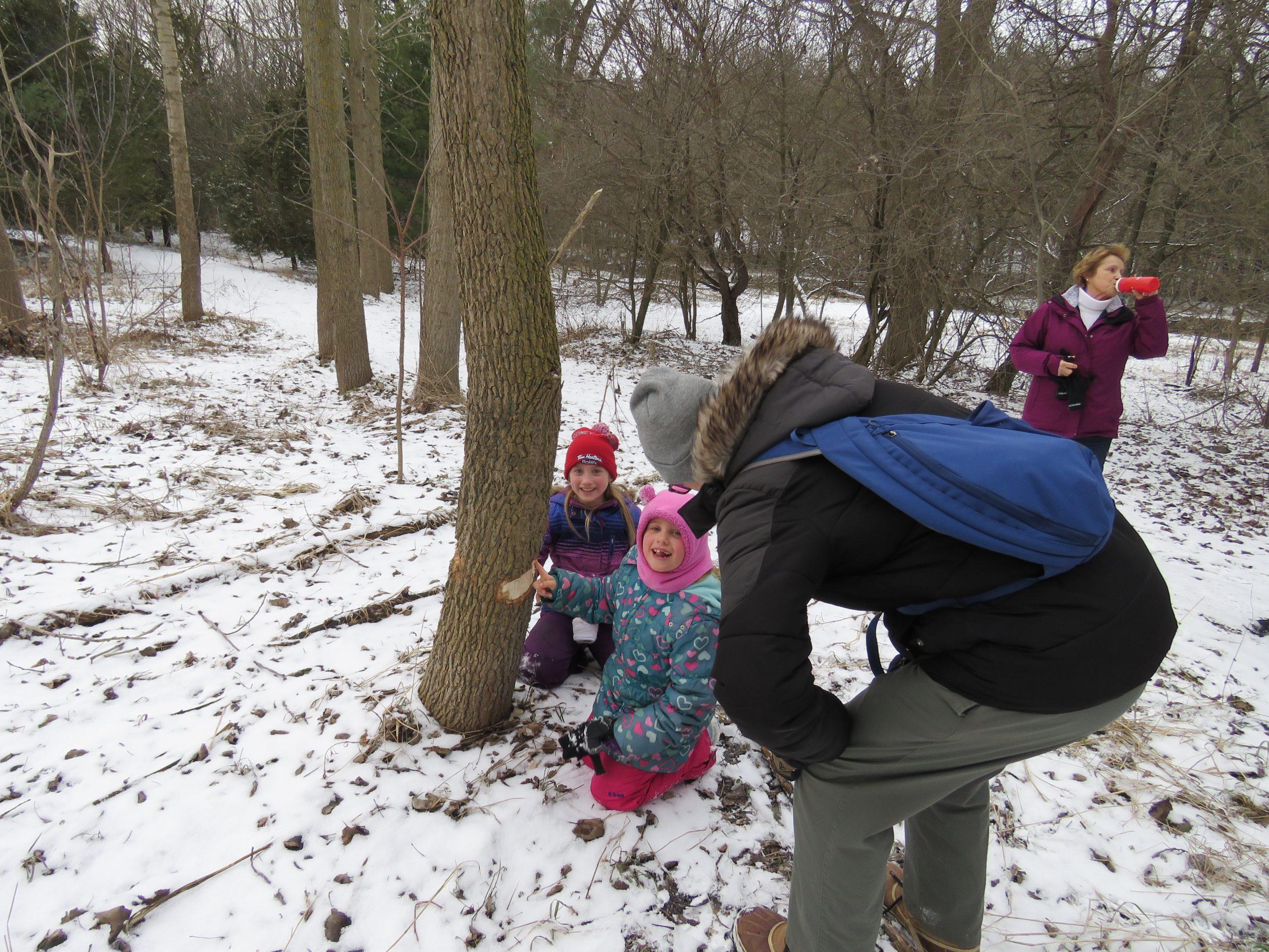 Inspecting Beaver damage
