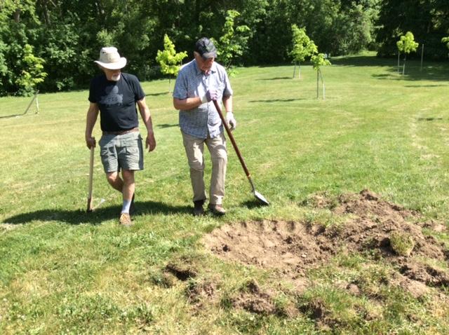 beginning-the-tree-planting
